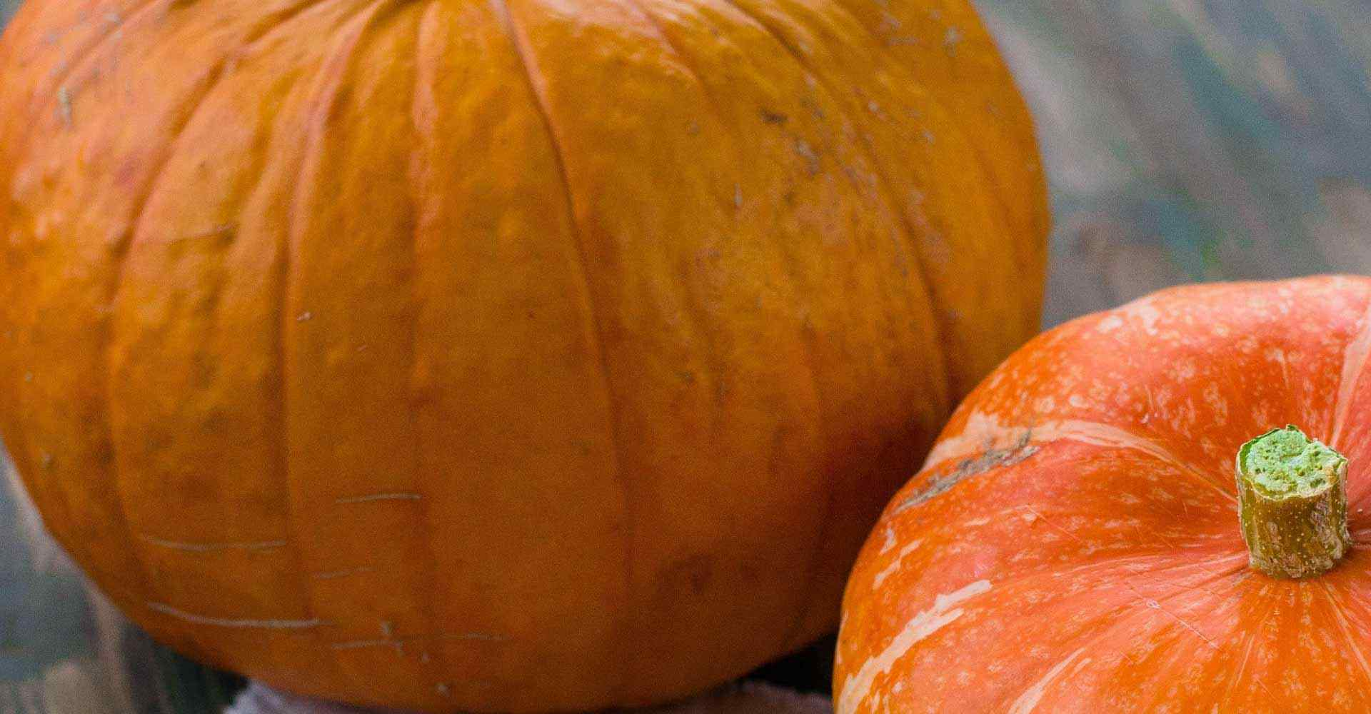Pumpkins as an emblem of the Thanksgiving, period where a telephone answering service is essential